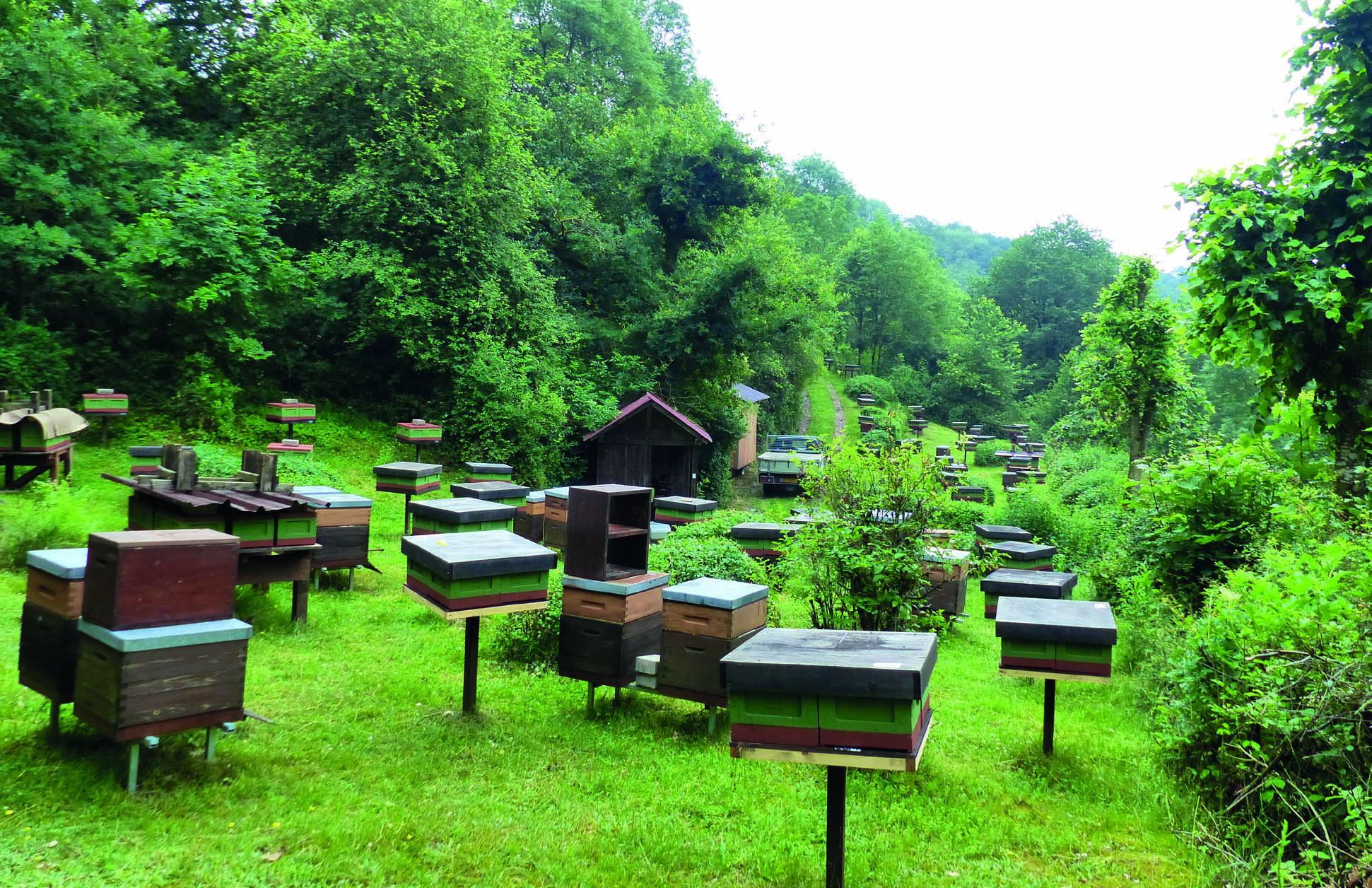 Varroaresistenz gehört in alle unsere guten Bienenpopulationen!
